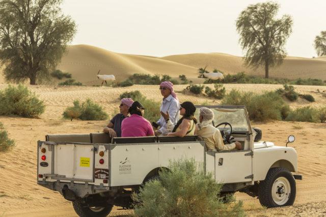 Wildlife Safari in vintage Land Rover Dubai
